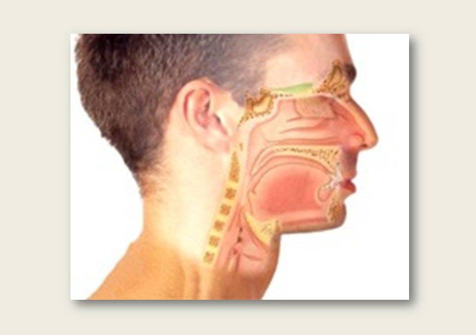 Intervención logopédica en la rehabilitación de la voz (I)