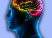 TDAH y el cerebro