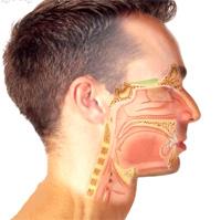 Fisiología de la voz resonante y colocación de la voz